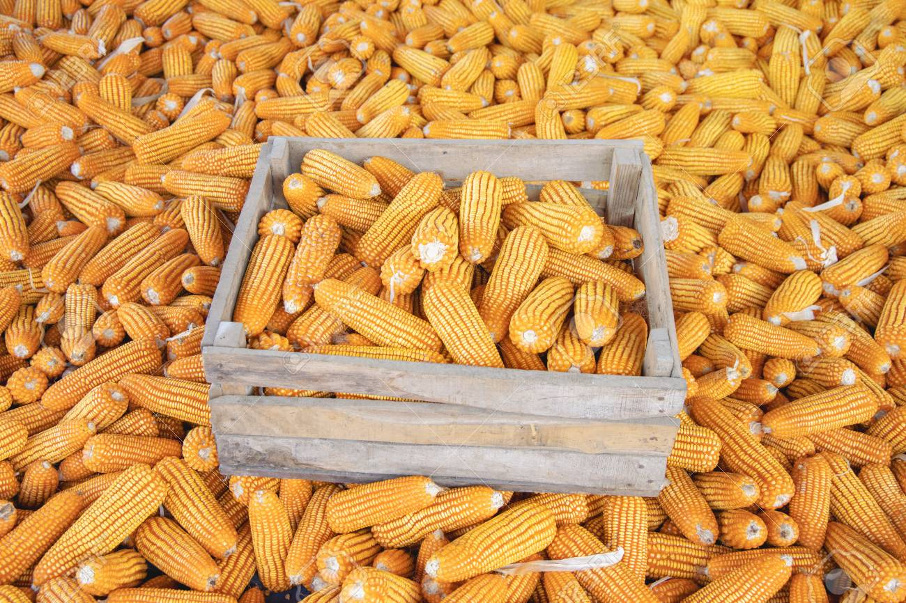 CBN bans forex for importation of maize/corn